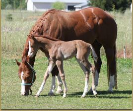 Intentions x Miss Sunday Stockings filly 1156.jpg