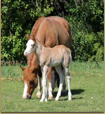 The Gift Of Midas x Miss Shadow Page filly 1181.jpg